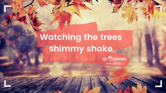 Watching The Trees Shimmy Shake